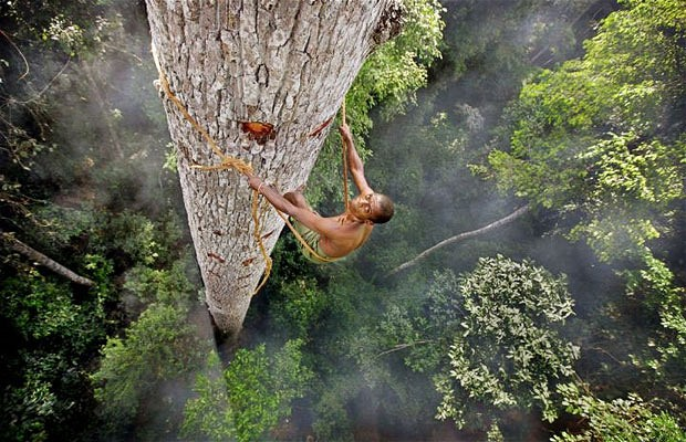 Bayaka Tribesman // Extreme Honey Collecting